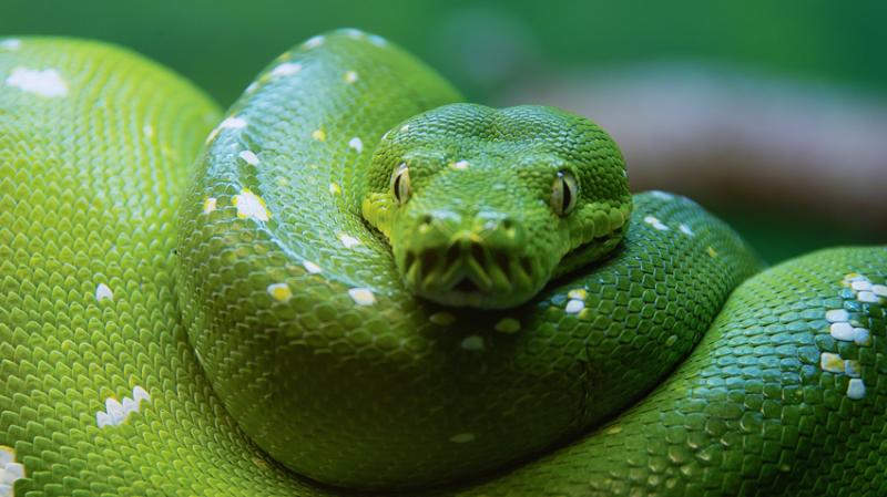 Змеи дублин, интересно, ирландия, пабы, пейзажи, пиво, факты