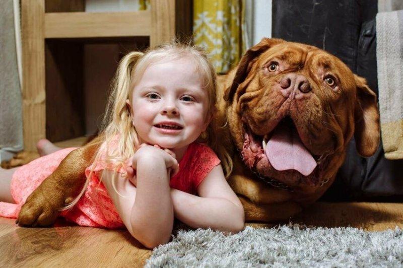 Кто бы мог подумать, что лучшим другом 4-летней девочки станет огромный французский мастиф