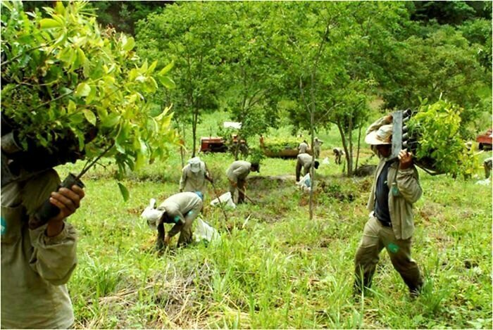 20 лет жизни и 2 миллиона высаженных деревьев: как бразильская пара восстанавливала лес