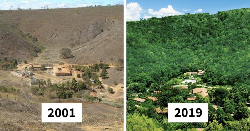 По данным Продовольственной и сельскохозяйственной организации ООН, с 1990 года навсегда утрачены 129 млн. га леса бразилия, восстановление, истории, лес, природа, пустошь, сальгадо, фотограф