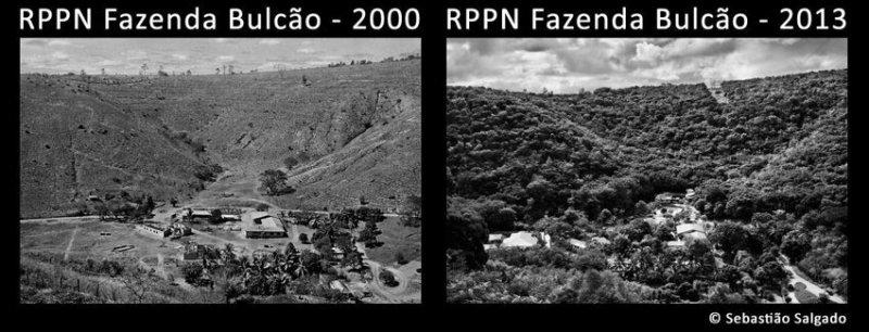 20 лет жизни и 2 миллиона высаженных деревьев: как бразильская пара восстанавливала лес бразилия, восстановление, истории, лес, природа, пустошь, сальгадо, фотограф