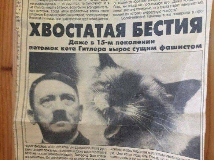 Коты-фашисты это сильно