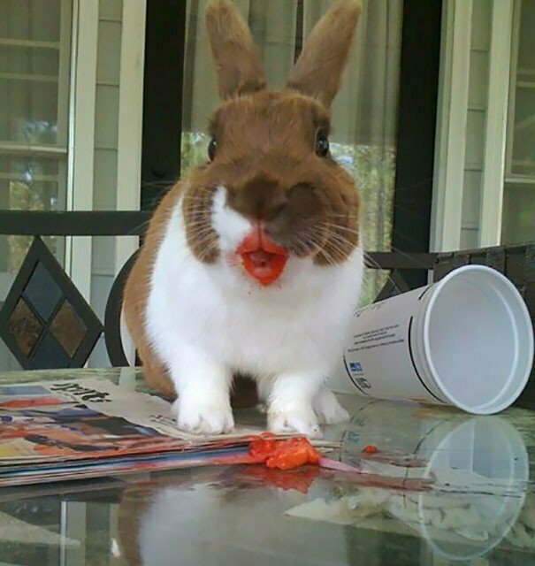 Да не ел я вашу клубнику