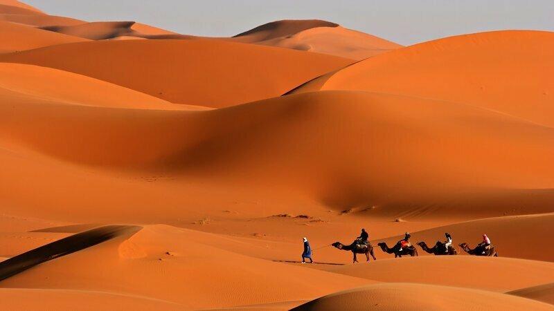 Дюны жизнь, интересное, оазис, пустыня, сахара, факты