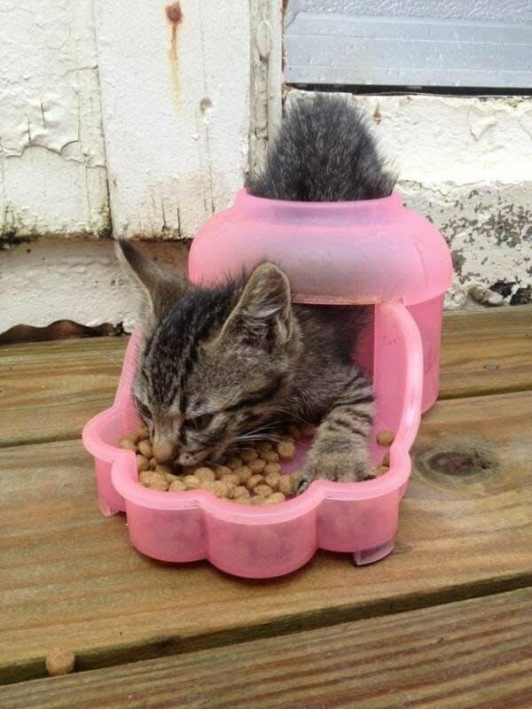 И кормушку использовать по своему усмотрению домашние животные, забавные фото с котами., кошка, кошка в доме, кошки, фото кошек, хозяева животные, юмор