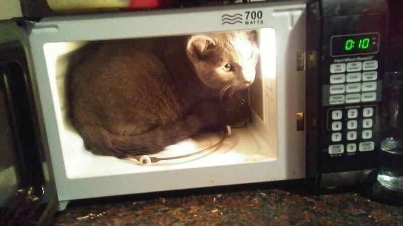 Когда рядом нет коробки, кошки найдут то, что ее напоминает, и угнездятся там