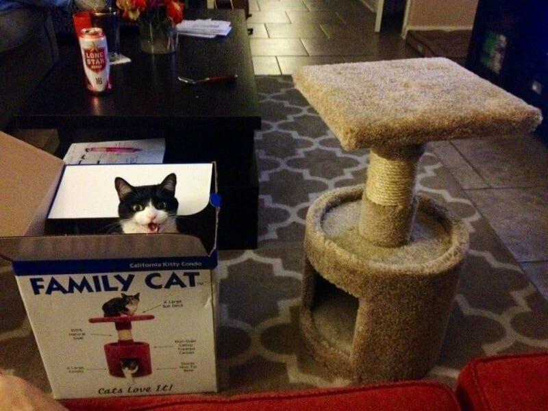 Если вы думаете, что они по достоинству оценят дорогой кошачий домик, то подумайте еще раз домашние животные, забавные фото с котами., кошка, кошка в доме, кошки, фото кошек, хозяева животные, юмор