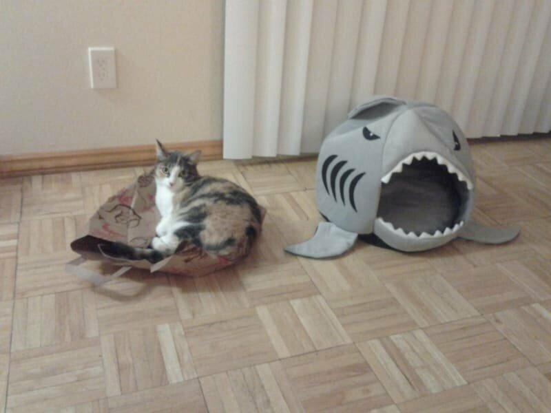 Самая прекрасная кошачья кровать на свете? Ну вот еще, какие глупости!
