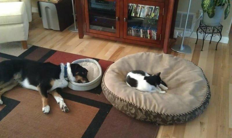 Кошки сами решают, какая кровать принадлежит им. Это все знают домашние животные, забавные фото с котами., кошка, кошка в доме, кошки, фото кошек, хозяева животные, юмор