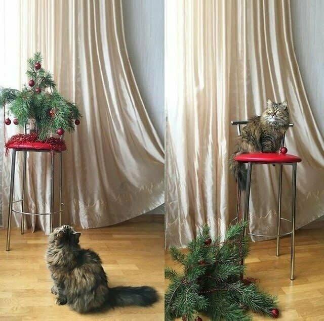На Новый год они обязательно уронят елку. Потому что так положено домашние животные, забавные фото с котами., кошка, кошка в доме, кошки, фото кошек, хозяева животные, юмор