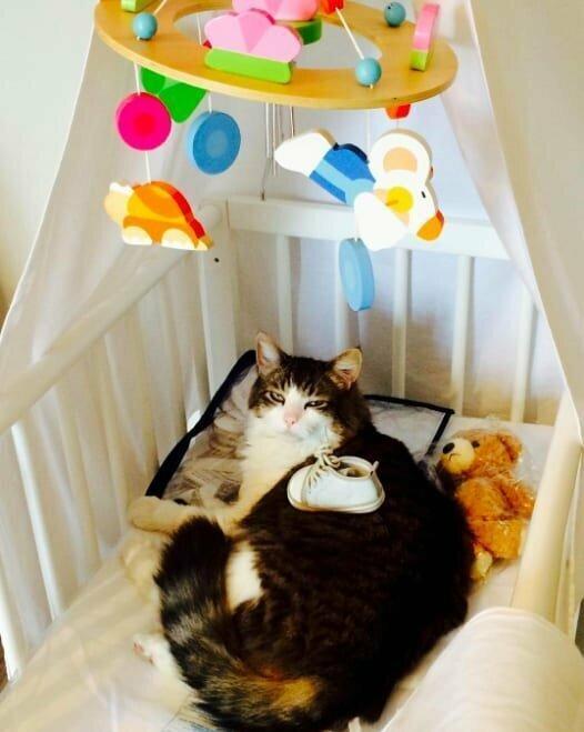 Потому что в итоге в доме должен остаться только один босс... и это не вы домашние животные, забавные фото с котами., кошка, кошка в доме, кошки, фото кошек, хозяева животные, юмор