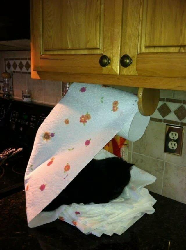 Бумажные полотенца? Только для использования на усмотрение вашей кошки домашние животные, забавные фото с котами., кошка, кошка в доме, кошки, фото кошек, хозяева животные, юмор