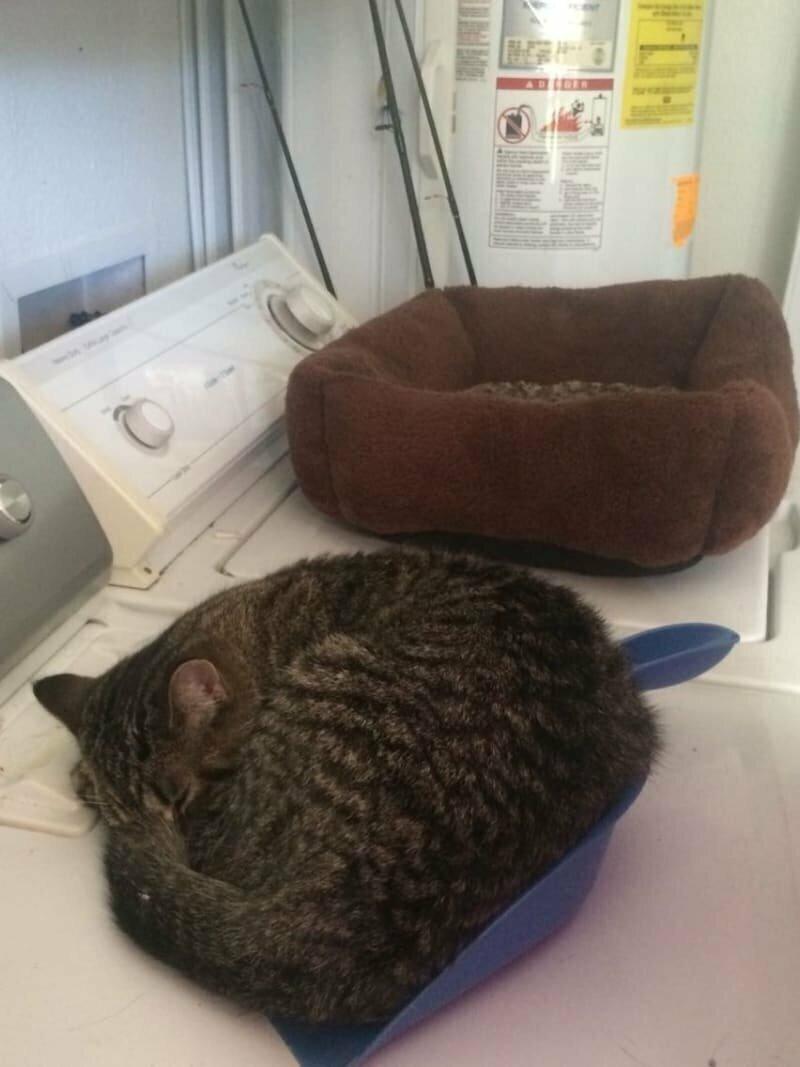 Во-первых, надо себе сразу уяснить: они будут спать где угодно, но только не там, где вы приготовили им место домашние животные, забавные фото с котами., кошка, кошка в доме, кошки, фото кошек, хозяева животные, юмор