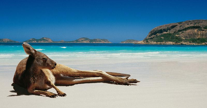 Несколько занимательных фактов о стране-континенте Австралии