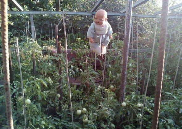 Руководство: как делать пугала дача, огород, подборка, прикол, прополка, сад, юмор