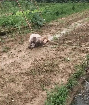 Помощники по вскапыванию огородов
