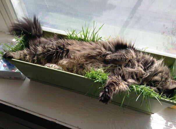 """""""Я посадила траву, чтобы моя кошка ее ела. Но она решила, что это новое место для сна"""""""