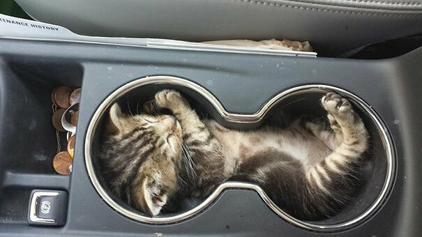 Держатель для котят