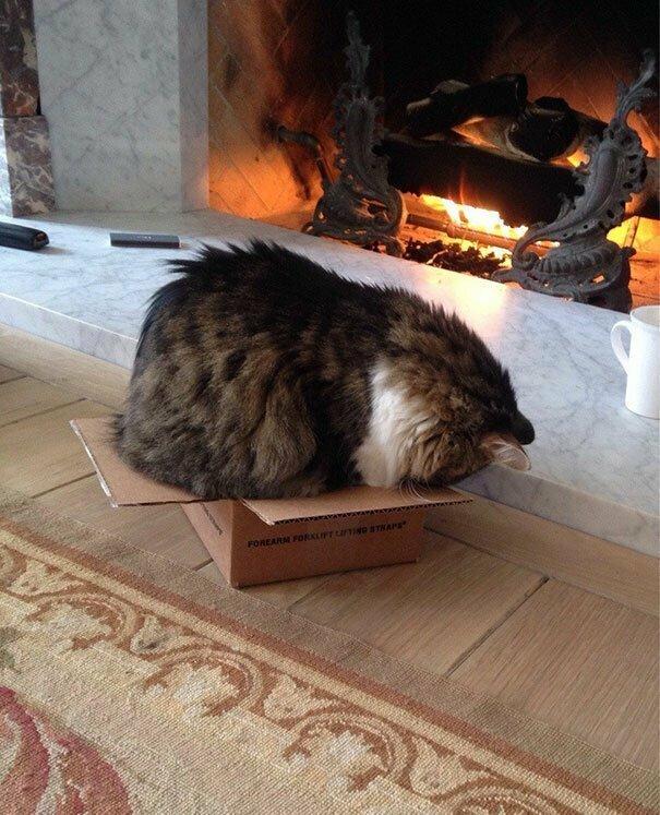 Для котов не существует слишком маленьких коробок