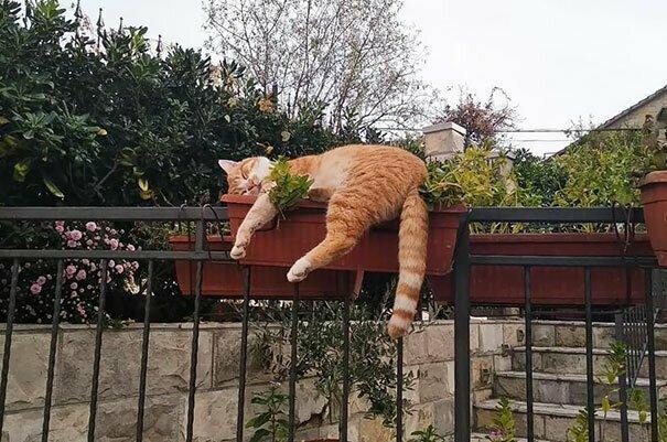 Так заснуть могли только коты