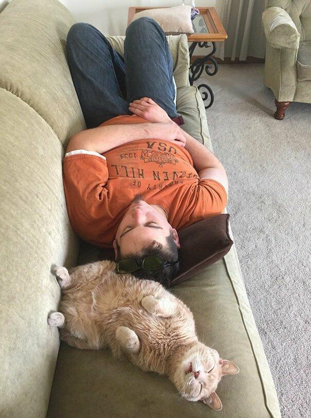Кому как, а для кошек это самые обычные позы для сна