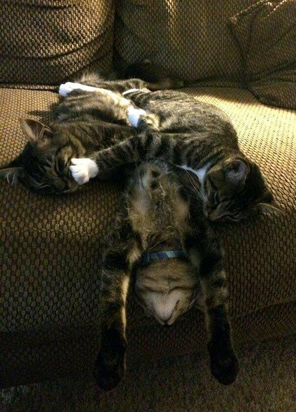 Как спят три кошачьих брата