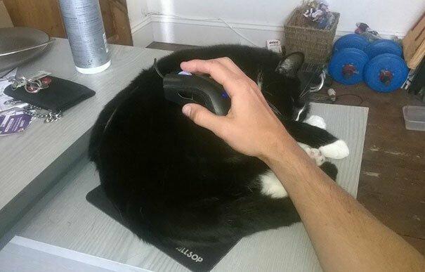 Спящие коты могут приносить пользу!