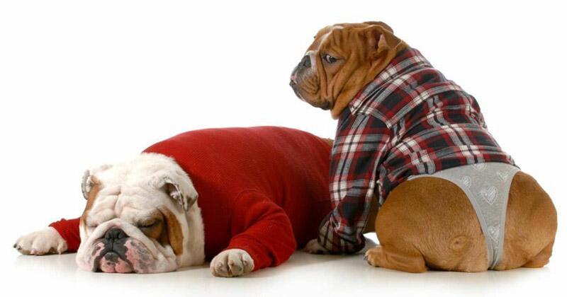 Стринги для собак