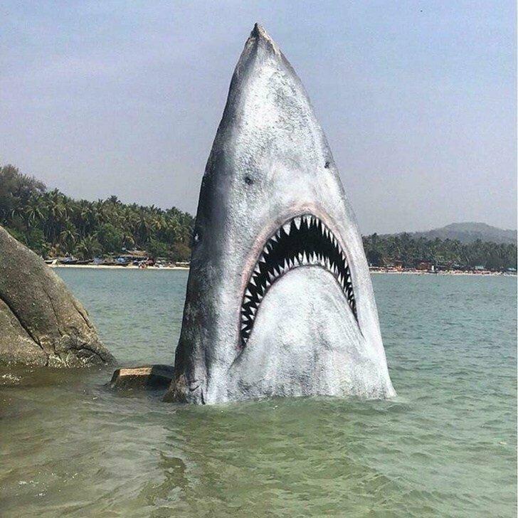 Акула атакует животные, иллюзия, люди, обман зрения, сломать мозг, удивление