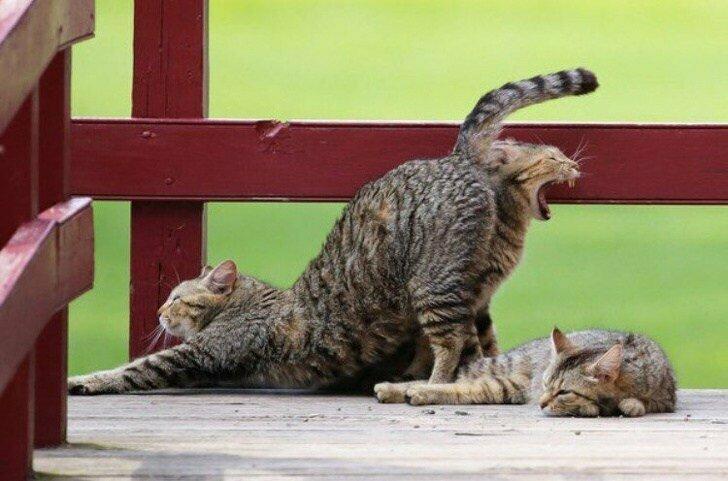 Неужели кошки могут и так размножаться? животные, иллюзия, люди, обман зрения, сломать мозг, удивление