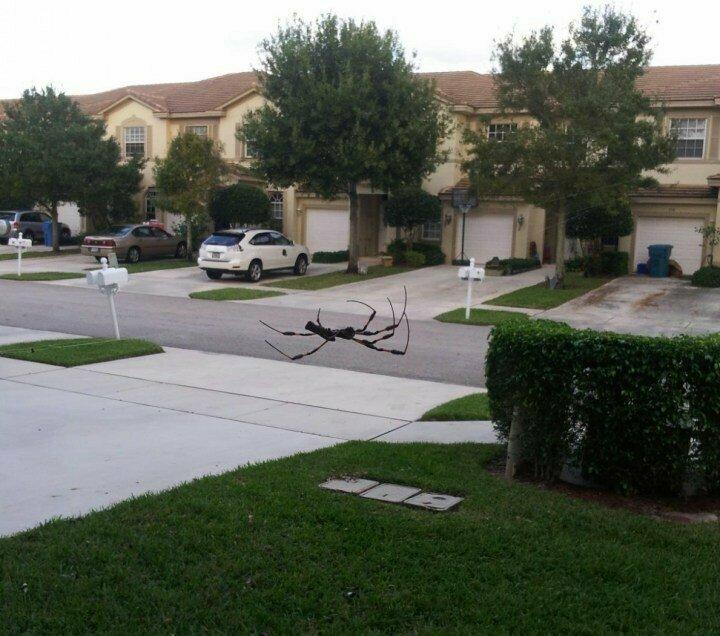 Огромный паук умер посреди улицы животные, иллюзия, люди, обман зрения, сломать мозг, удивление