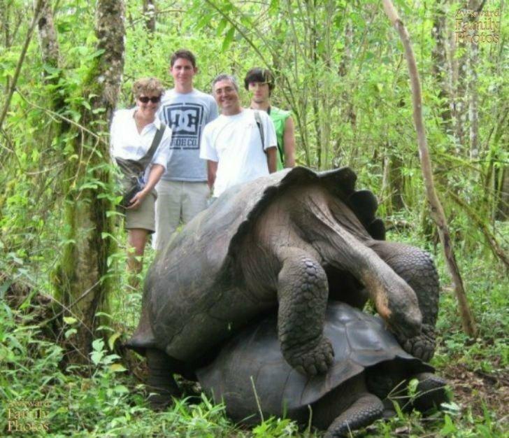 Говорят, черепахи могут заниматься ЭТИМ сутками. Люди просто завидуют. авто, отдых, отпуск, прикол, семья, смешно, фото, фотографии, юмор