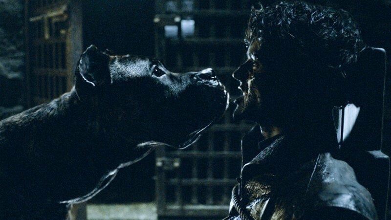 Санса говорит Рамси, что его собакие его сожрут, потому что голодны. Но откуда она об этом знала, если не присутствовала при разговоре о собаках? игра престолов, кино, киноляпы, сериал, спойлеры, фанаты