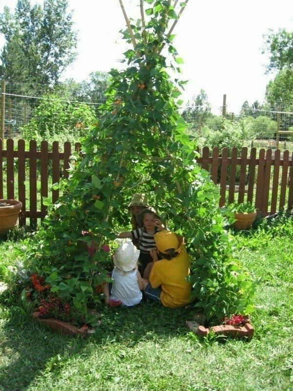 Для создания отличного детского шалаша подойдут любые вьющиеся растения.