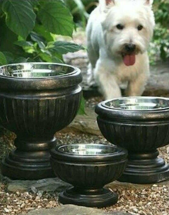Если ваша собака ест в саду, поставьте ее миски в низкие вазоны - и они станут украшением сада!