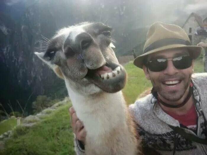 Забавные селфи со зверьем, которые заряжают позитивом
