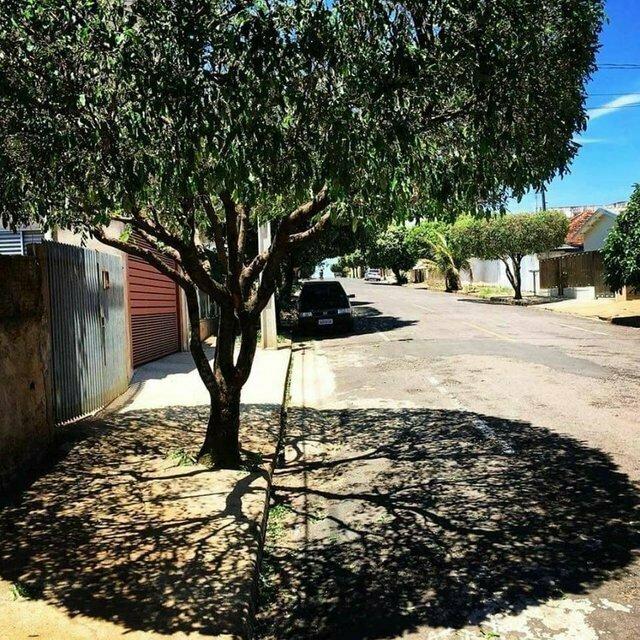 Потрясающая тень от дерева