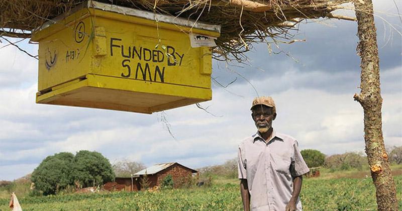 Фермеры в Африке вплотную занялись разведением пчел и как оказалось совсем не ради меда