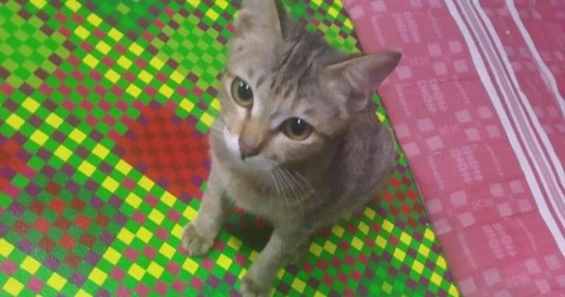 История о том, как котенок загладил свою вину за съеденные наушники животные, змея, индонезия, история, кот, наушники, подарок