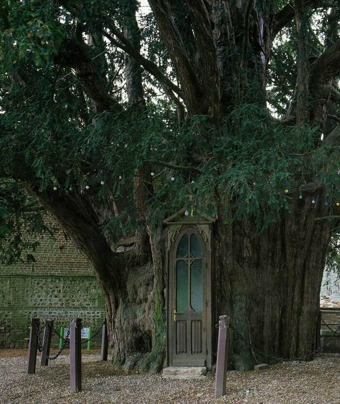 Дом + дерево - крыльцо =