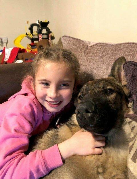 8-летняя Меган с любимицей семьи животные, история, овчарка, операция, реконструкция, собака, череп