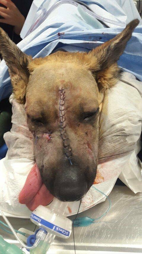 Операция была проведена в ветеринарном центре Derby's Pride в городе Дерби, Великобритания