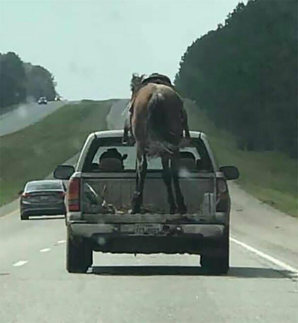 Техас. Наши дни автомобильное, водители, водители ада, дорожное, на дороге, необычные автомобили, странные автомобили, юмор