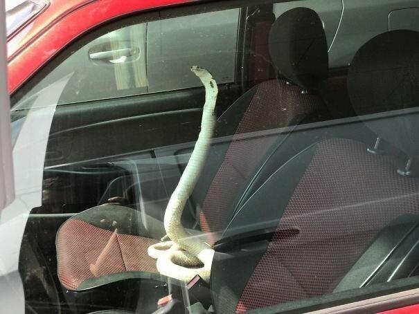 Новый вид противоугонной системы? автомобильное, водители, водители ада, дорожное, на дороге, необычные автомобили, странные автомобили, юмор
