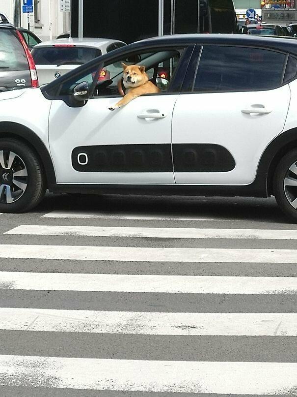 Водитель застопорил движение. Таким как он вообще нельзя права выдавать! автомобильное, водители, водители ада, дорожное, на дороге, необычные автомобили, странные автомобили, юмор