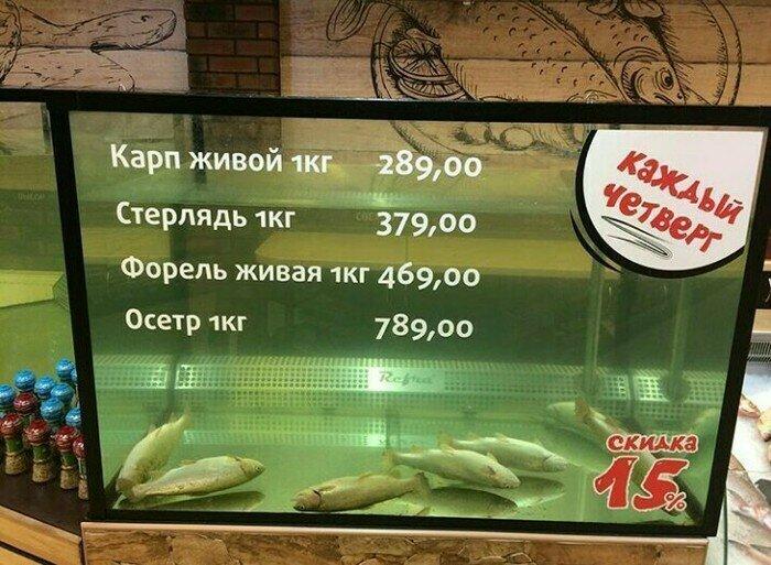 Рыба живая, просто отдыхает запарились, отдых, подборка, прикол, смекалка, усталость