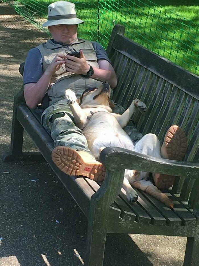 Собакен с очками :) запарились, отдых, подборка, прикол, смекалка, усталость