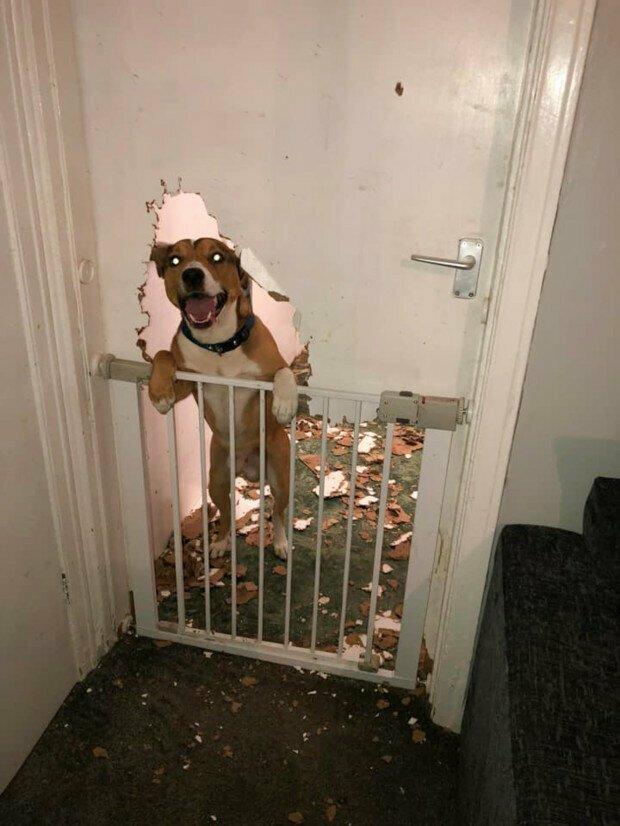 Стоит только оставить питомца на пару минут... беспорядок, вред, дом, животные, подборка, проступок, собака