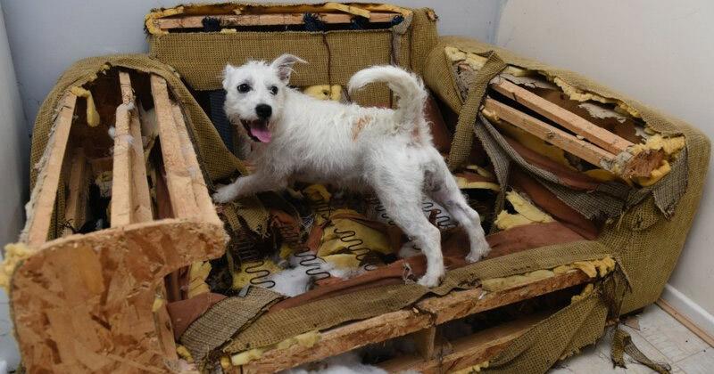 Новый дизайн беспорядок, вред, дом, животные, подборка, проступок, собака