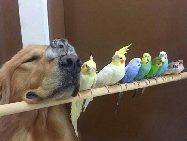 Свой среди чужих животные, забавно, подборка, прикол, птицы, юмор